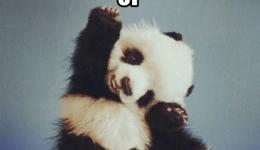 high-five-happy-panda