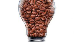20049722_ml_bulb-bean