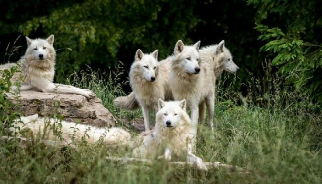 your pack