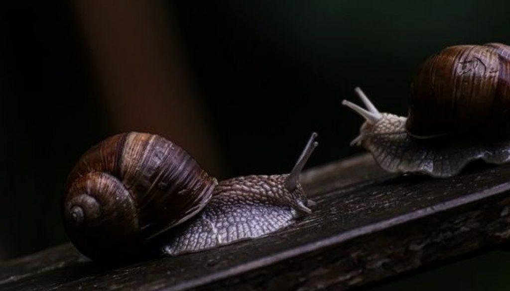 slow as a snail sale